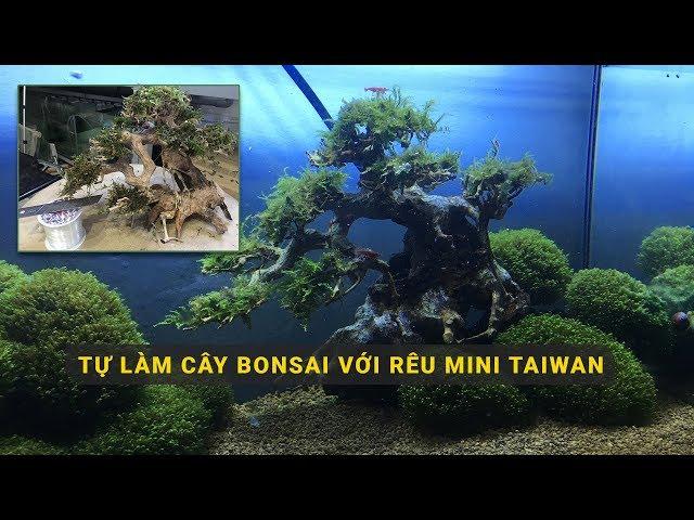 Tự làm cây Bonsai chơi hồ thủy sinh CỰC CHẤT Với Rêu Mini Taiwan