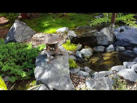 My Small Space Japanese Garden (2nd year)