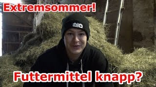 Farm Vlog: Stall | Extremsommer | Futtermittelknappheit