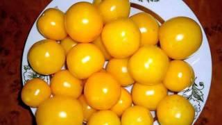 семена фирмы седек(Редкие семена помидор! Семена почтой http://фечшоп.рф., 2015-10-30T20:09:32.000Z)