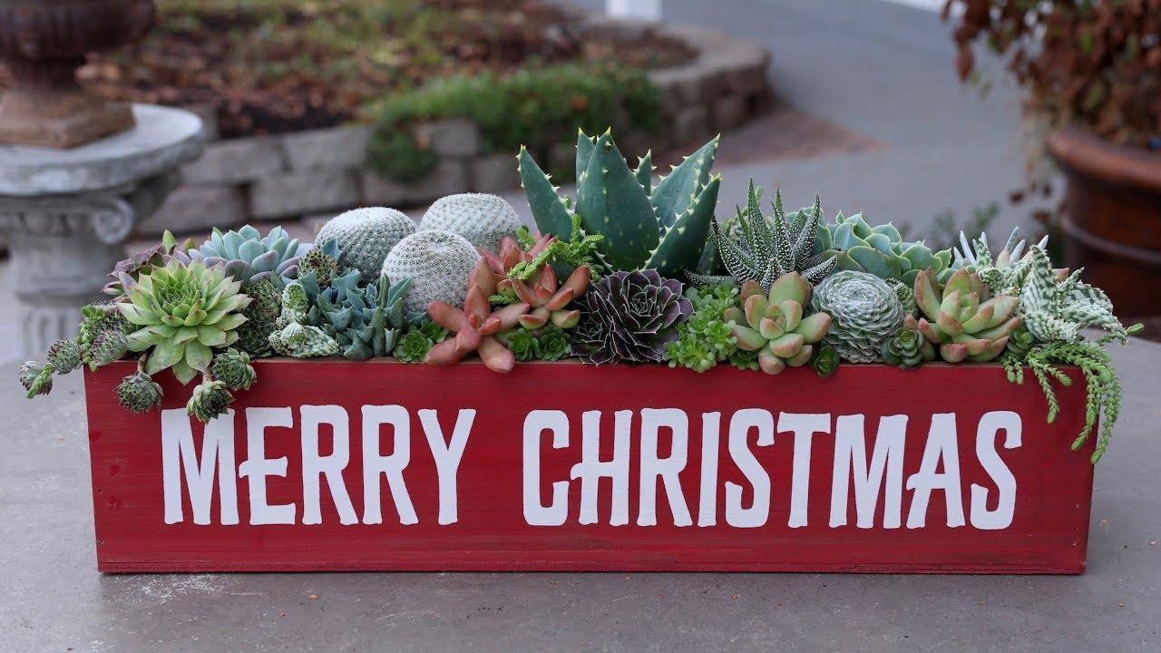 Christmas Succulent Arrangement.Christmas Succulent Arrangement