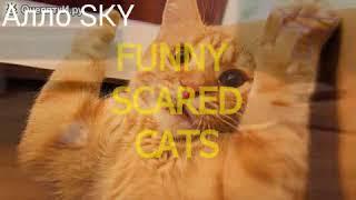 Зашквар полный life Кошки, Котята, Коты делают Собак