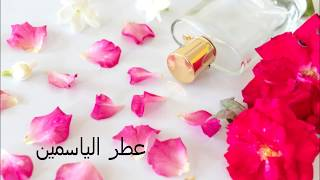عبيد العوني شجرة الياسمين عطر وسحر وجمال عربي قديم Jasminum