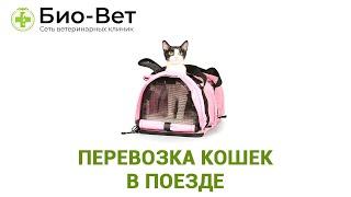 Перевозка Кошек В Поезде & Что Нужно Знать О Путешествии с Кошкой На Поезде. Ветклиника Био-Вет