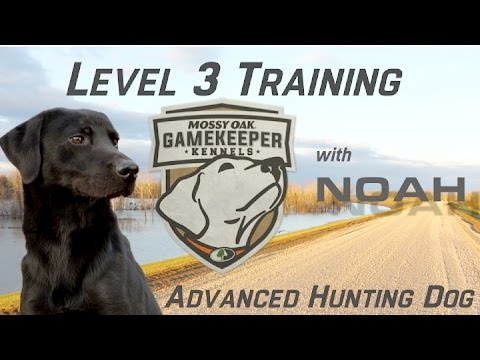 Mossy Oak Dog Training