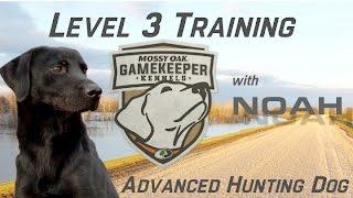 Advanced Hunting Dog Training
