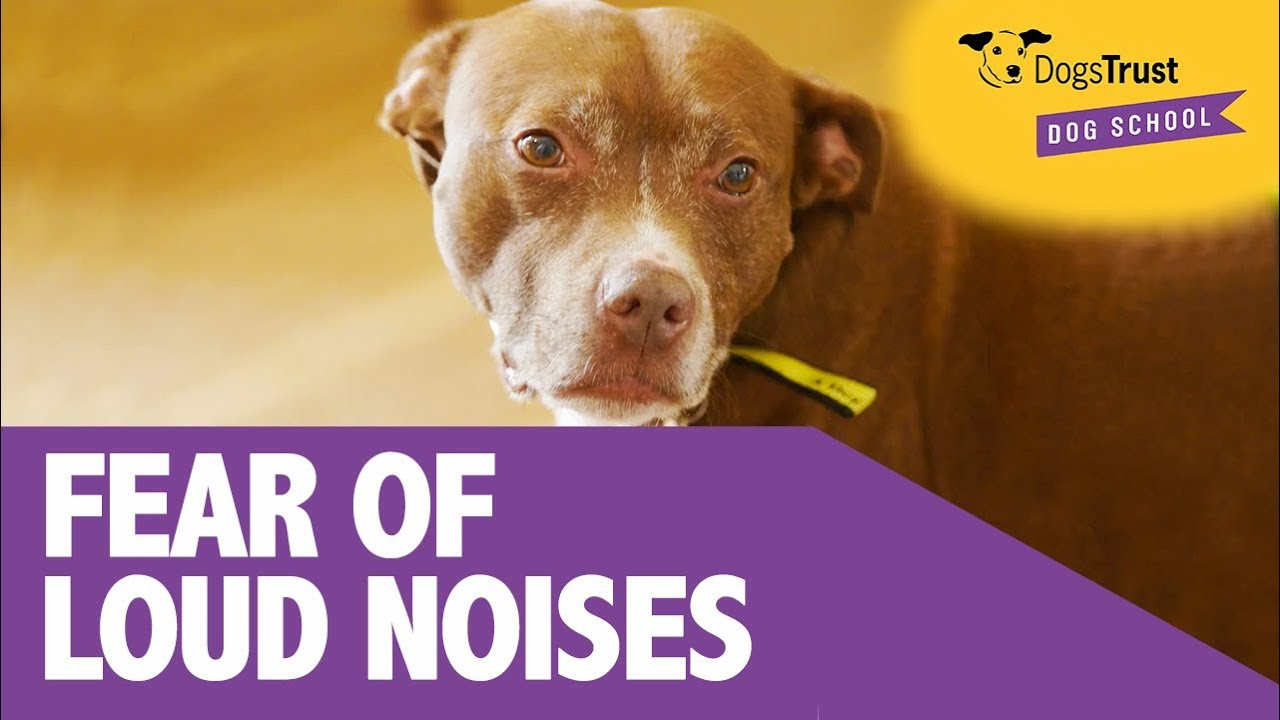 What to do if your dog is scared of loud noises | Behaviour
