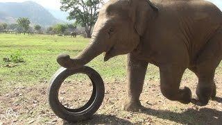 Elephant Kids Love Playing With All Of Their Toys