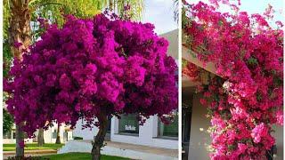Olha Que Simples e Prático Fazer Mudas de Primavera
