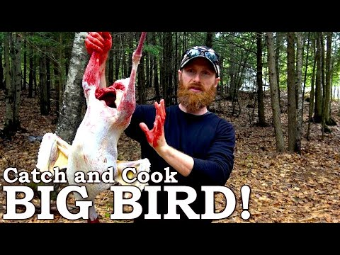Catch And Cook TASTY Wild BIRD! | 100% WILD Food SURVIVAL Challenge!