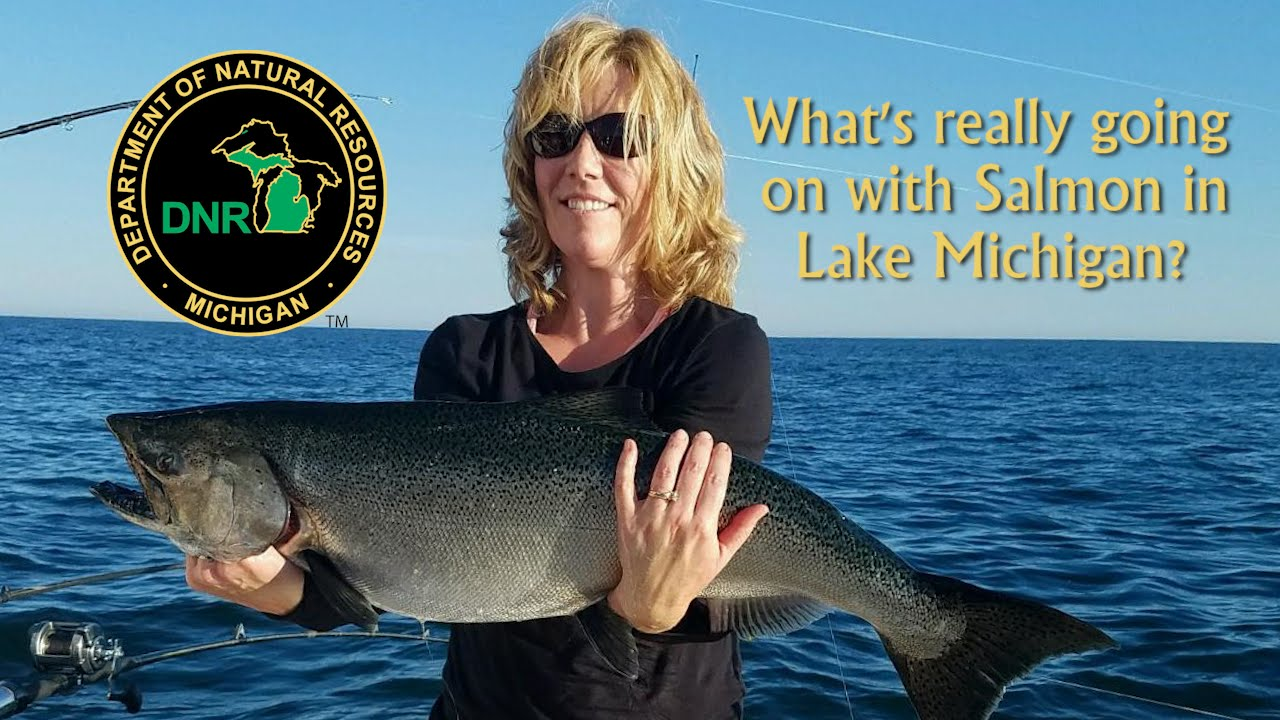 What 39 s really going on with salmon in lake michigan youtube for Michigan dnr fishing report