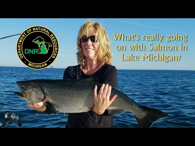 Whats really going on with salmon in Lake Michigan?