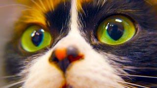 КАК СДЕЛАТЬ КУКИ