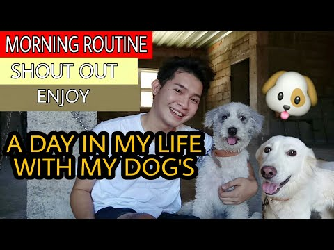 A DAY IN MY LIFE WITH MY DOG'S🐶 (MORNING ROUTINE)(SHOUT-OUT) from YouTube · Duration:  10 minutes 57 seconds