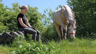 Pferd Mustang Stute Wildpferd