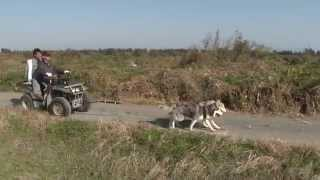 犬ぞりシーズンに向けて、バギトレ&自転車トレーニング再開しました。