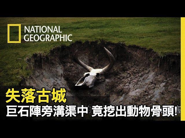 巨石陣溝渠中竟找出原牛的頭骨!! 更找到原牛的蹄印,難道這些動物對他們有甚麼特殊的意義?【失落古城】