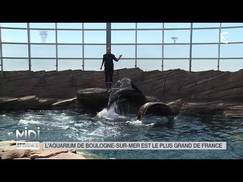 LE FEUILLETON : L'aquarium de Boulogne-sur-Mer est le plus grand de France
