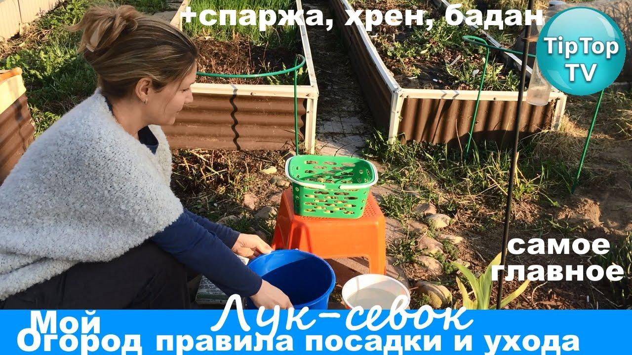 Лук-севок мир увлечений интернет магазин лук-севок купить лук-севок заказать лук-севок доставка по россии лук-севок.