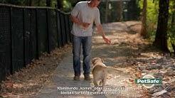 PetSafe® Hundetraining mit dem Ferntrainer  - das Abrufkommando
