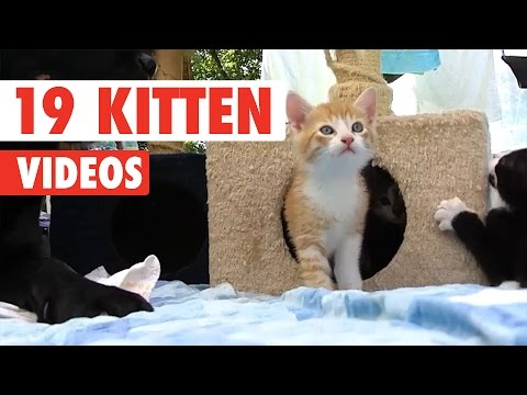 19 Funny Kitten Videos Compilation 2017