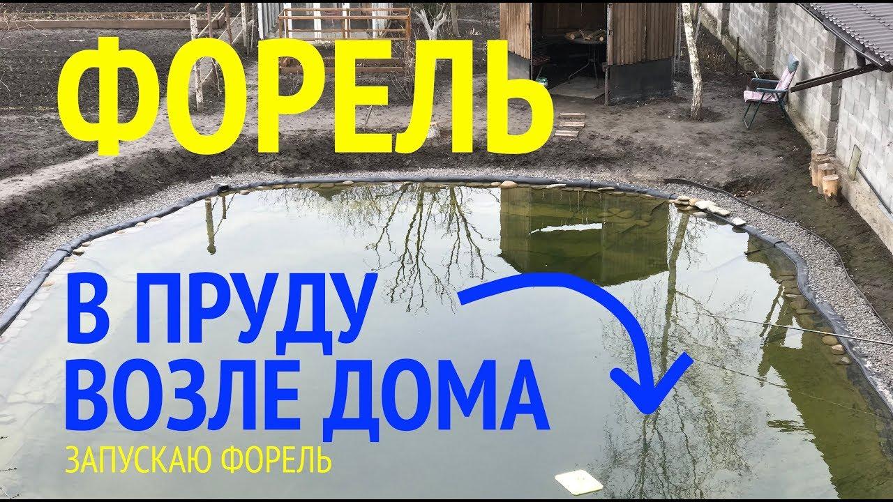 Форель в пруду на участке возле дома. Зарыбление форелью.