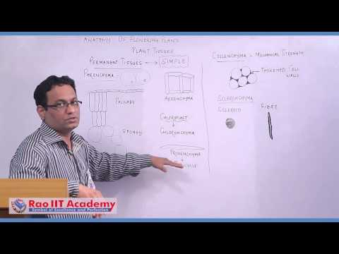 Plant Tissues - NEET AIPMT AIIMS Botany Video Lecture [RAO I