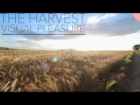 The Harvest- Visual Pleasure