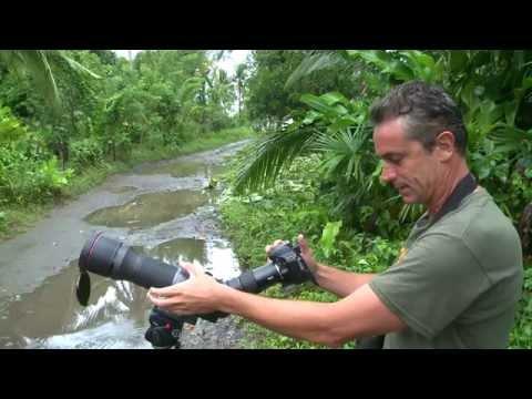 Black Catbird, Cozumel Island, Mexico
