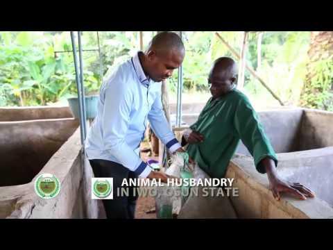 Animal Husbandry in Iwo, Osun State