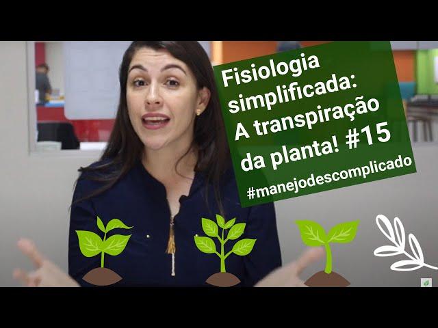 Fisiologia simplificada: A transpiração da planta! #15 #manejodescomplicado