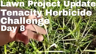 Tenacity Herbicide Challenge Lawn Update Day 8 .  How to fix an ugly lawn using Tenacity Herbicide