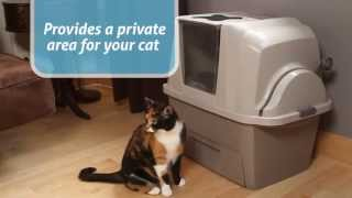 видео туалет для кошек