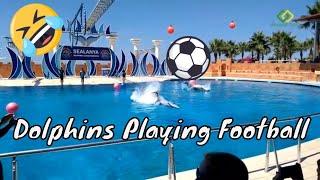 Dolphins Playing Football   Sealanya DolphinPark   Turkey