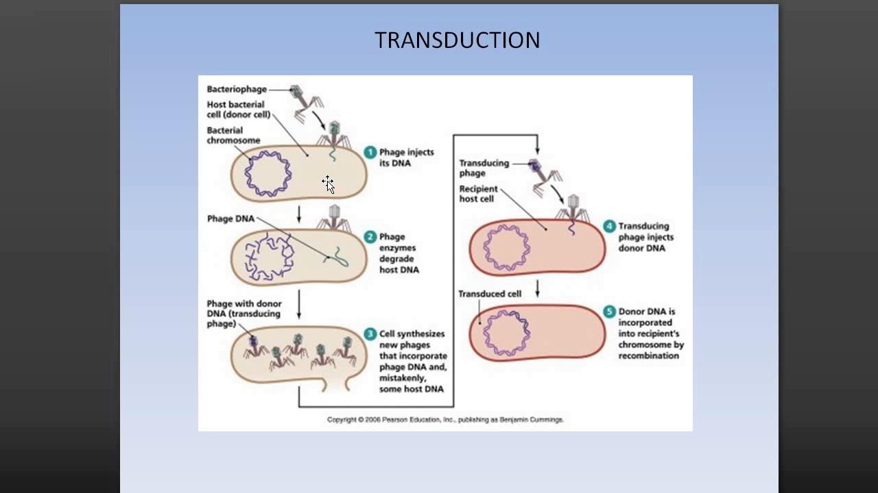 transcription translation transduction conjugation replication tamil