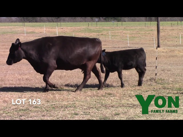Yon Family Farms Lot 163