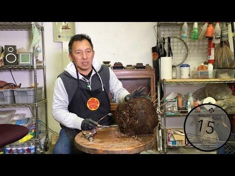 Deciduous Bonsai training and health, Bonsai Boon