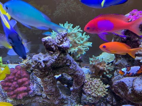 300G Reeftank Update 23 Fish Rundown