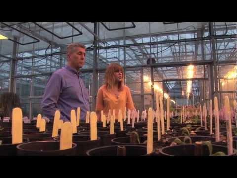Student Talk - Plant & Soil Sciences | UBC Applied Biology Program