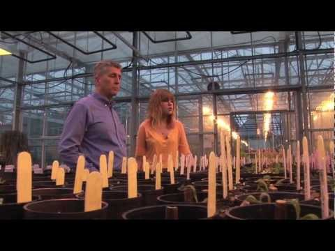 Student Talk - Plant & Soil Sciences   UBC Applied Biology Program