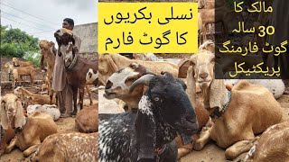 Goat farming practical||How to start goat farming || Goat farm||Goat farming in Pakistan