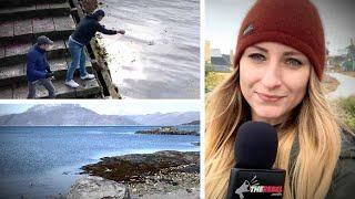 Що можете Гренландія зробити для Америки? Полювання, риболовля та мінеральні багатства | Джессіка Swietoniowski