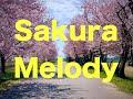Sakura Melody/清水翔太×加藤ミリヤ 作詞作曲/槇原敬之 カバー 歌詞付き 3月4日発売Bespoke収録