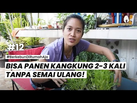 #12 CARA SUPER MUDAH TANAM KANGKUNG - Berkebun #DiRumahAja