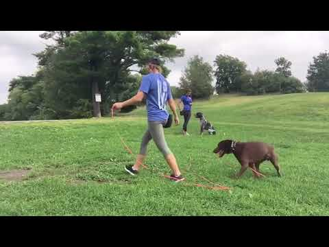 Recall dog training drills | Training dogs recall at the park