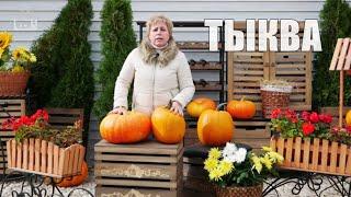 Тыква ➡ Сбор урожая и хранение 🌟 Видео обзор hitsadTV