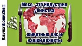 Филип Уоллэн: Мясо - это индустрия убийства животных, нас и нашей планеты