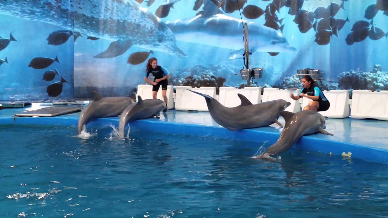 Dolphin Show Barcelona Zoo Part 1 Of 3 Youtube