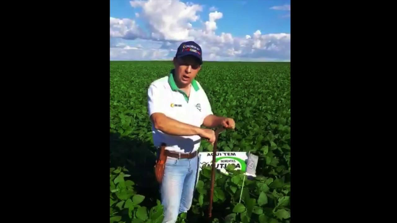 Análise microbiológica do solo