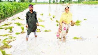 Dhan ki Kasht I Village life in Punjab Pakistan
